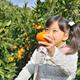 食欲の秋だ!みかん狩りに家族へ行こう!静岡のおすすめ4選