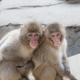 ふれあいや行動展示。子どもにおすすめの動物園3選|福岡県