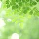 めずらしい高山植物も!新潟の植物園は夏のレジャーにもおすすめ|4選