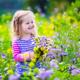 子どもと楽しい!京都府の子連れにおすすめ植物園4選