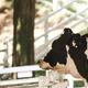 静岡県の牧場で貴重な体験をしよう!おすすめ牧場3選