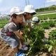 土に触れ、秋の味覚を手に入れよう!芋掘りスポット4選|埼玉県