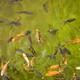 水のそばで涼みながら楽しめる!初めてでも安心の釣り堀3選|愛知県