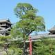 熊本県に行ったら!子どもにもおすすめのご当地お土産3選