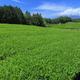 特選!食べておいしい・もらって嬉しいご当地お土産3選|静岡県
