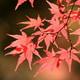 色とりどりの秋を見に行こう!子連れ紅葉狩りスポット4選|愛知県