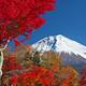 自然が織りなす美しさのハーモニー! 紅葉狩りスポット4選│静岡県