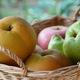 もうすぐ食べごろ!おいしい秋の味覚 梨狩りスポット3選|茨城県