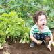 北海道でじゃがいも掘り!収穫の喜びを体験できる施設3選
