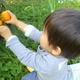 秋の味覚を収穫しよう!埼玉県のみかん狩りスポット3選