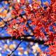箱根周辺で紅葉をみながら温泉でまったり。おすすめ施設4選|神奈川県