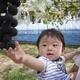子連れで楽しめる!甘くておいしいぶどう狩りスポット3選|埼玉県