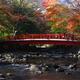 紅葉と温泉に癒やされたい!親子で行きたい伊豆の温泉施設4選|静岡県
