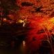 紅葉のライトアップ!愛知県のおすすめスポット3選