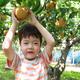 秋の味覚!子どもと一緒に梨狩りできるおすすめスポット3選|東京都