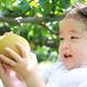 鳥取の名産品「梨」が食べ放題!子連れにおすすめ梨狩りスポット3選