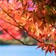 秋といえば紅葉!新潟県内で子どもと楽しめる名所3選