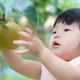 今しかできない体験をしよう!神奈川県の子連れにおすすめ梨狩りスポット3選