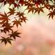 茨城県の紅葉イベントで親子で秋を満喫!おすすめイベント3選