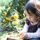 子どもと行く、アクセス便利な神奈川県のみかん狩りスポット3選