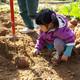 子どもと一緒に自然体験ができるさつまいも掘りスポット3選|神奈川県