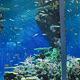 家族でおでかけ!島根県で行ってみたいおすすめ水族館