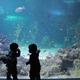 関東の水族館おすすめ21選!子どもに人気で生き物に触れる!