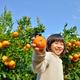 古都・京都で秋の味覚を満喫!みかん狩りスポットおすすめ3選