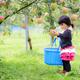 宮城県のりんご狩りはココがおすすめ!もぎたてがうれしい3選
