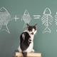 数字に強くなるおすすめ知育玩具!数の世界で遊んで学ぼう3選