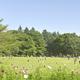 小金井公園は外遊び大好きな子どもが喜ぶ施設がいっぱい!