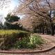 府中の森公園は自然がいっぱい!バーベキューも水遊びも|東京都