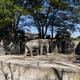 吉祥寺から徒歩で行ける!井の頭自然文化園の魅力を紹介|東京都