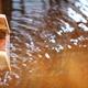 「源泉 那須山」はこだわりの日帰り温泉!お菓子の城へも|栃木県