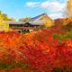 京都の紅葉おすすめ3選 子どもと紅葉狩りに行こう!