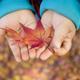 神奈川の紅葉スポットに行こう!四季の素晴らしさを親子で体感