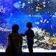 福島・いわき市の水族館「アクアマリンふくしま」で環境を学ぼう