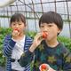 静岡市久能エリアでいちご狩り!おすすめ人気園5選&観光スポット|静岡県