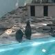 入園無料!レッサーパンダが人気の夢見ケ崎動物公園|神奈川県