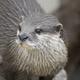 市川市動植物園でカワウソと握手してみよう!|千葉県