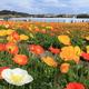 ポピーの里 館山ファミリーパークでお花、手作り体験、釣りも|千葉県