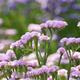 「花摘み園チースの里」でのお花に癒されたい!|千葉県