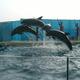新江ノ島水族館の親子で楽しめるおすすめポイントを紹介!|神奈川県
