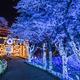 さがみ湖リゾートプレジャーフォレストは人気レジャースポット!|神奈川県