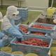 かねふく「めんたいパーク大洗」で工場見学!試食OK!|茨城県