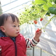 群馬「原田いちご園」のいちご狩りは子連れの嬉しいがいっぱい!