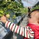 那須高原農園いちごの森でとちおとめを味わおう!|栃木県
