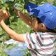 りんごが有名!長野の観光農園松井農園で子連れ味覚狩り|長野県