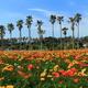白浜フラワーパークでアウトドアを満喫!花摘みやキャンプも|千葉県