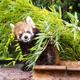 横浜の野毛山動物園は小さい子どもにおすすめ!|神奈川県